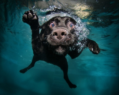 dog_black_underwater_swimming_water_74417_1280x1024